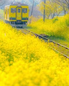 ムーミン列車-3