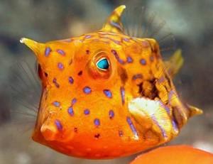 海水魚-110-13