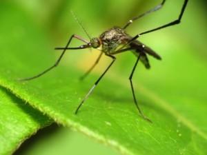 蚊-100