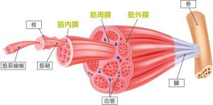 筋膜-101