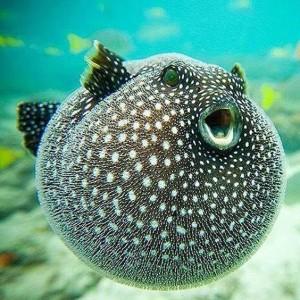 海水魚-110