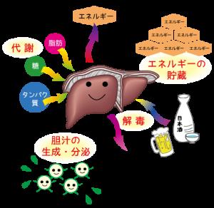 肝臓-110