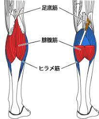 足の構造-113