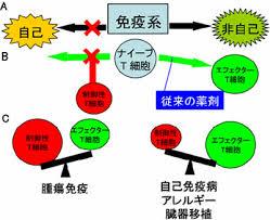 T細胞10-1-3