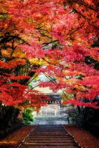 嵐山-105