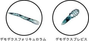 顔ダニ10-1