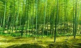 竹林10-3