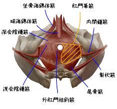 骨盤底筋群10-2