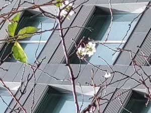 狂い桜21-10-106